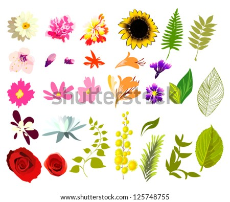 collection of flowers and leaves. vector - stock vector