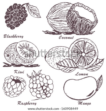Collection of fruit sketches - part 3 - stock vector