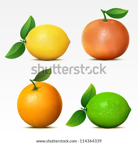 Collection of fruits on white background Mesh. - stock vector
