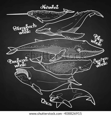 Collection of graphic whales isolated on chalkboard. Vector giant sea and ocean creatures in black and white colors.  - stock vector
