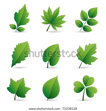 collection of green leaves element - stock vector