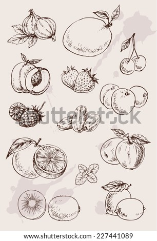 collection of  hand drawing isolated  fruits - stock vector