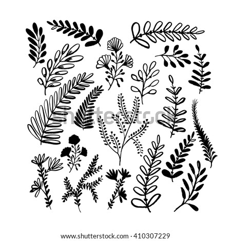 Collection of hand drawn branches. Hand drawn nature elements. Plants and flowers. Ink illustration. Isolated on white background. Hand drawn natural elements. - stock vector