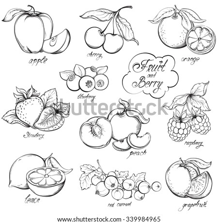 Collection of hand drawn Fruits and Berries isolated on white background. Vector vintage sketch style illustration. - stock vector