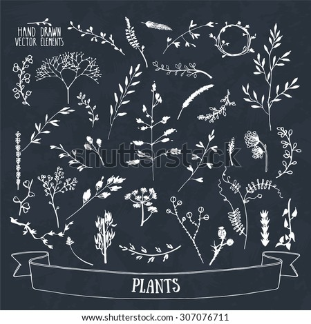 Collection of hand drawn plants, flowers and tree branches silhouettes. Isolated vector. - stock vector