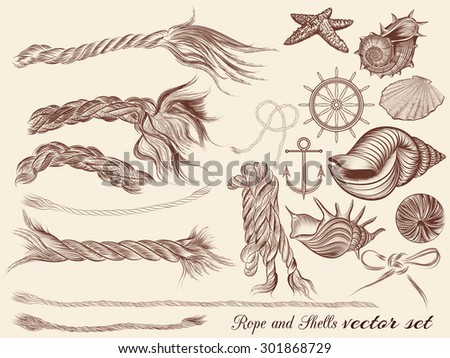 Collection of hand drawn sea elements rope and shells in vintage style - stock vector