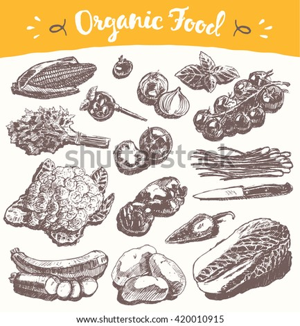 Collection of hand drawn vegetables, vector illustration, sketch, engraved style