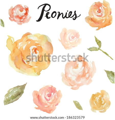 Collection Of Hand Painted Watercolor Peonies. Watercolor Vector. Vector Peony Collection