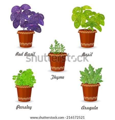 collection of herbs in a flowerpots - stock vector