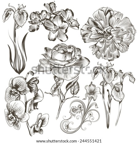 Collection of high detailed vector flowers for design - stock vector