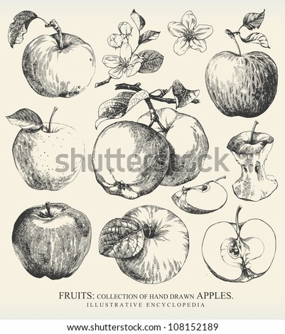 Collection of highly detailed hand drawn apples. - stock vector