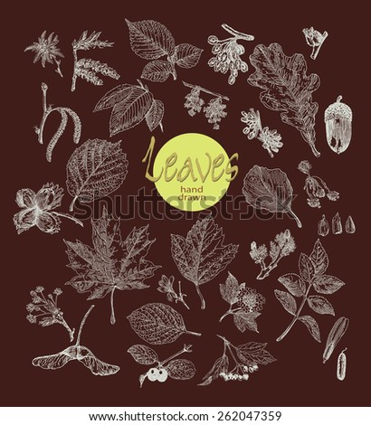 Collection of highly detailed hand drawn leaves, fruit and inflorescence isolated on dark background.  Botany  background. - stock vector