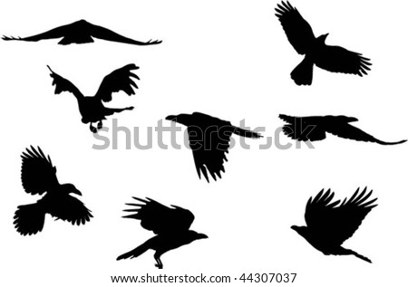 Collection of japanese ravens flying