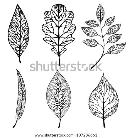 Collection of leaves. Vector set - stock vector