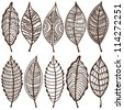 Collection of leaves. Vector set. Sketches - stock photo