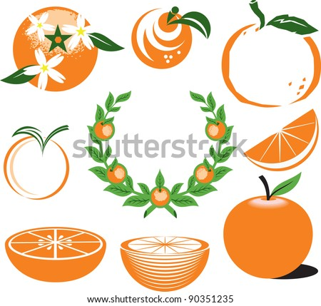Collection of Oranges - stock vector