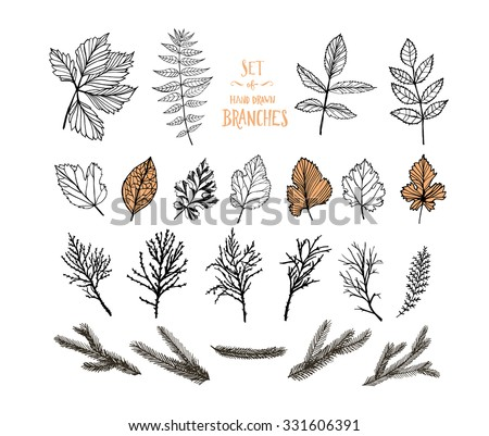 Collection of plants. Hand drawn leaves and branches. Set of decorative plants. Isolated on white background. Ink illustration. Botanical elements. - stock vector
