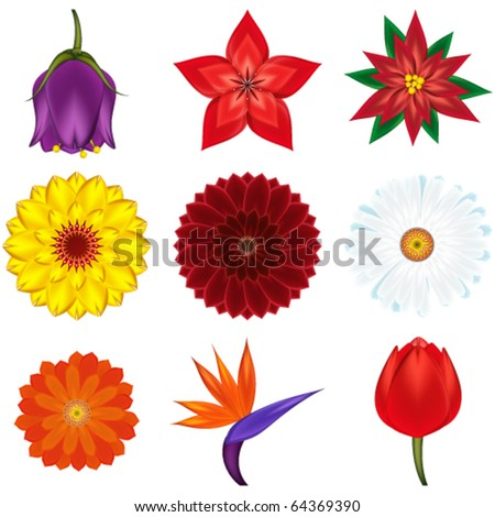 Collection of popular and exotic flowers - vector illustration. - stock vector
