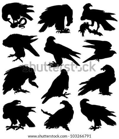 Collection of silhouettes of birds of prey - stock vector