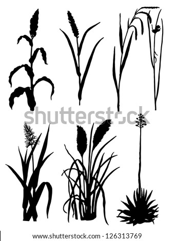 Collection of silhouettes of cones - stock vector