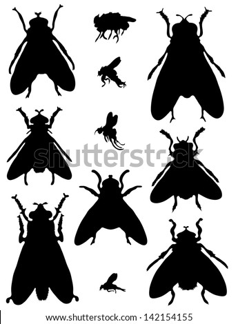 Collection of silhouettes of flies - stock vector