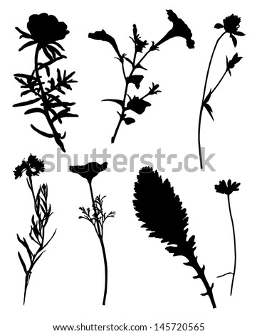 Collection of silhouettes of flowers - stock vector