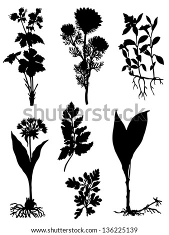 Collection of silhouettes of herbs - stock vector