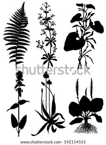 Collection of silhouettes of plants - stock vector