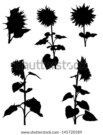 Collection of silhouettes of sunflowers - stock vector