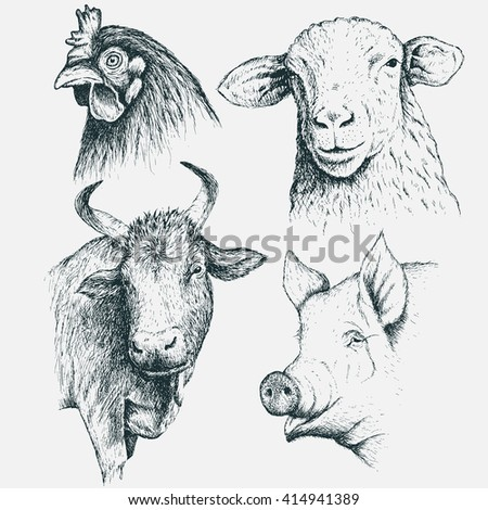 Collection  of  the heads of  farm animals .Isolated on white background.Sheep,cow,chicken and pig. Advertising design agricultural products.Vector illustration.Hand drawn style - stock vector