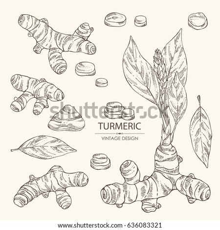 Collection of turmeric: turmeric root, flower and leaves. Hand drawn