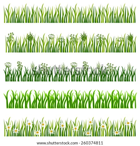 Collection of various grass types in vector