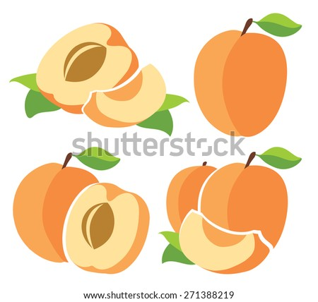 Collection of vector apricots - stock vector