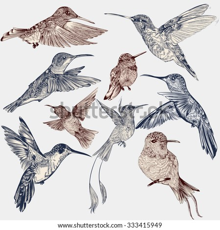 Collection of vector decorative hummingbirds in vintage engraved style - stock vector