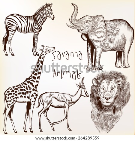 Collection of vector engraved savanna animals - stock vector
