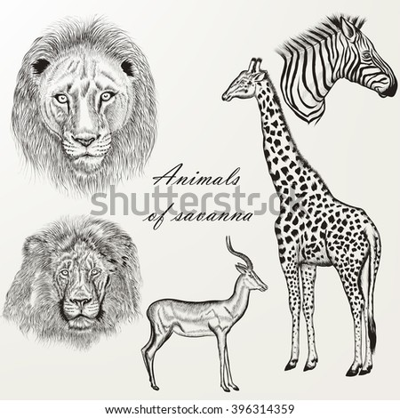 Collection of vector hand drawn detailed savanna animals in retro style - stock vector