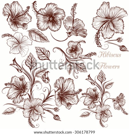 Collection of vector hand drawn hibiscus flowers - stock vector