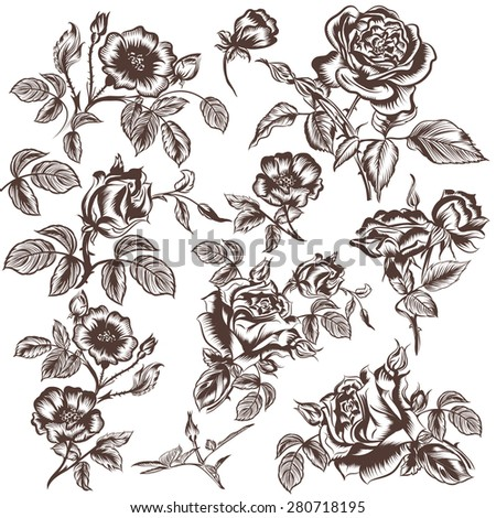 Collection of vector hand drawn rose flowers - stock vector