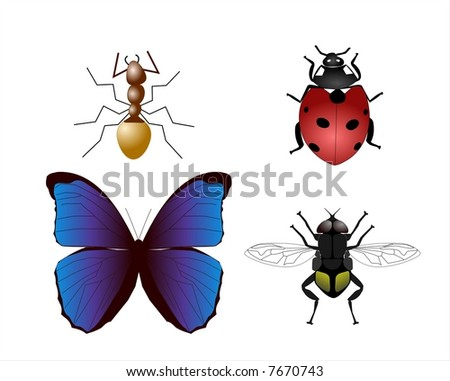 Collection of vector illustration of insects - stock vector