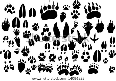Collection of vector outlines of animal foot prints - stock vector