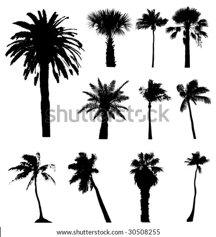 Collection of vector palm trees silhouettes. Easy to edit, any size. - stock vector