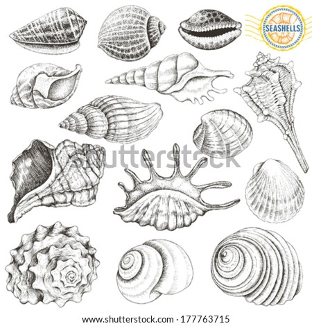 Collection of vector seashells hand-drawn. - stock vector