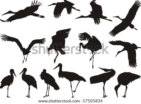 Collection of vector silhouettes on white storks - stock vector