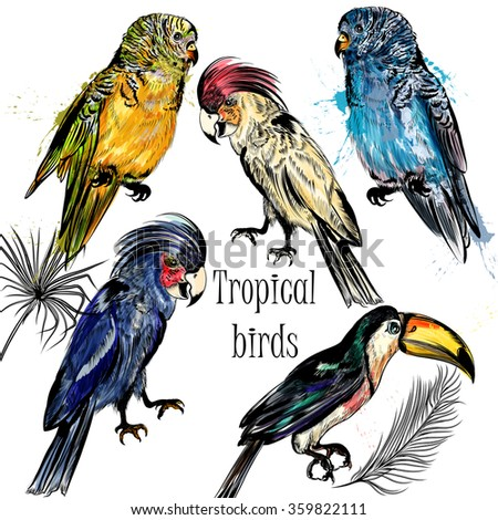 Collection of vector tropical birds in engraved and watercolor styles