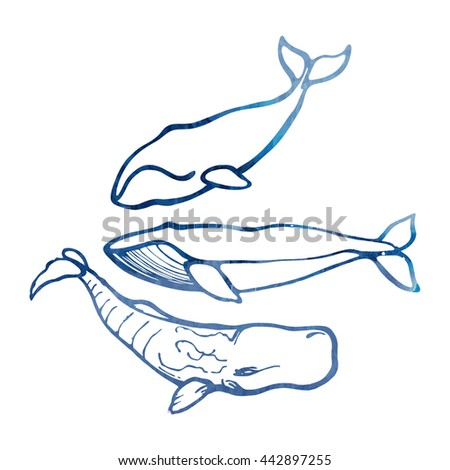 Collection of whales. The blue whale, bowhead, sperm whale. Hand Drawn. - stock vector