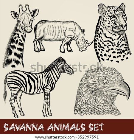 Collection or set of savanna animals zebra eagle leopard giraffe in engraved style - stock vector