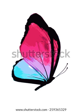 Color butterfly , isolated on white - stock vector