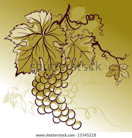color illustration with grapes - stock vector