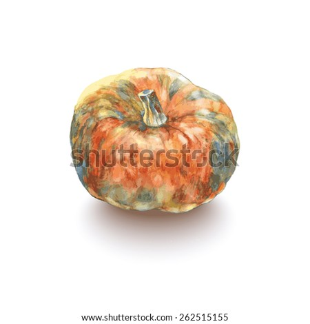color sketch isolated pumpkin.vector illustration