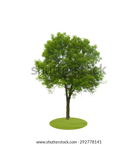Colored Silhouette Tree Isolated on White Backgorund. Vecrtor Illustration. EPS10 - stock vector